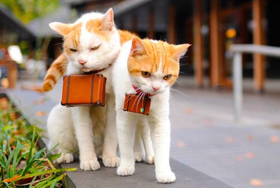 japanese-cat-2
